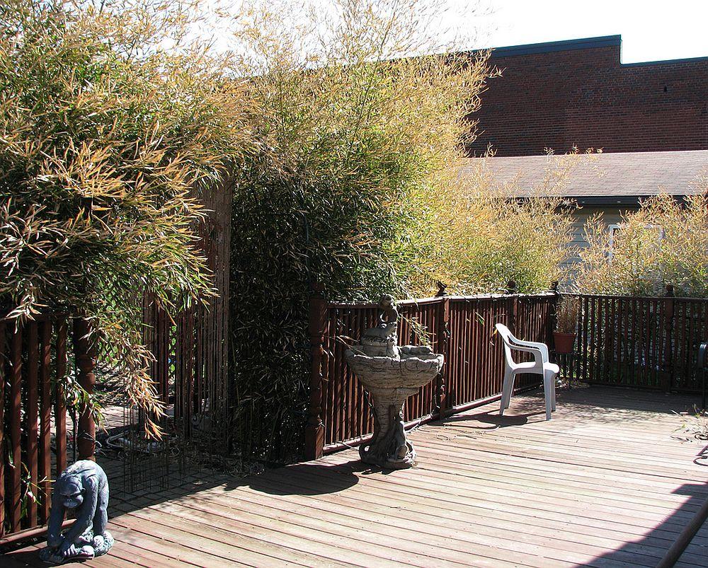 adelaparvu.com despre bambusul in gradina, text Carli Marian (1)