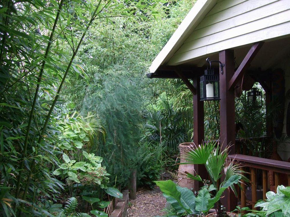 adelaparvu.com despre bambusul in gradina, text Carli Marian (11)