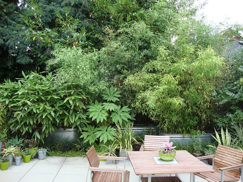 adelaparvu.com despre bambusul in gradina, text Carli Marian (5)