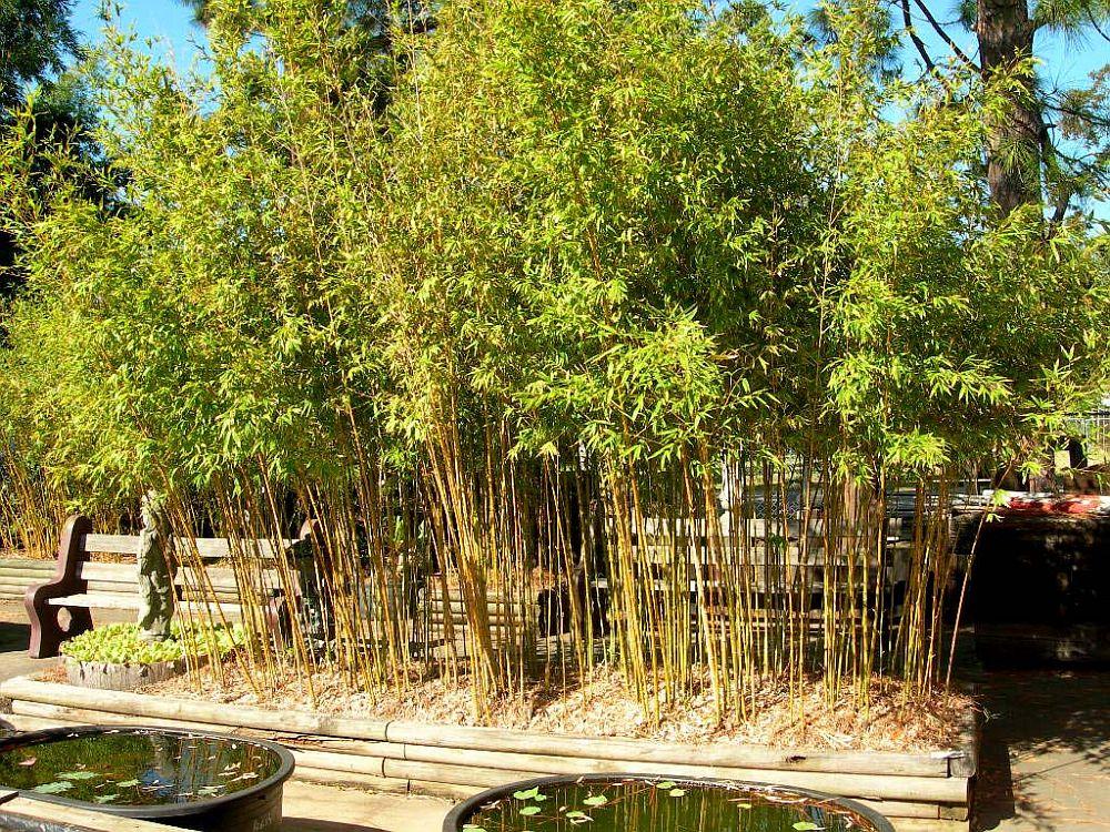 adelaparvu.com despre bambusul in gradina, text Carli Marian, Foto Bamboo Craft