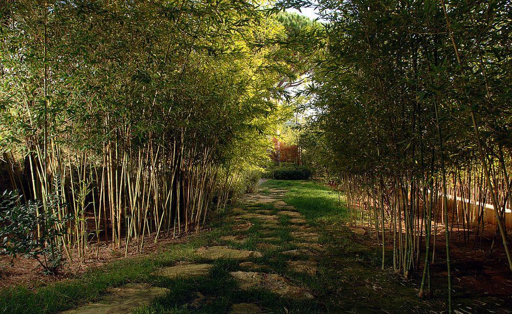 adelaparvu.com despre bambusul in gradina, text Carli Marian, Foto Francisc Landscape