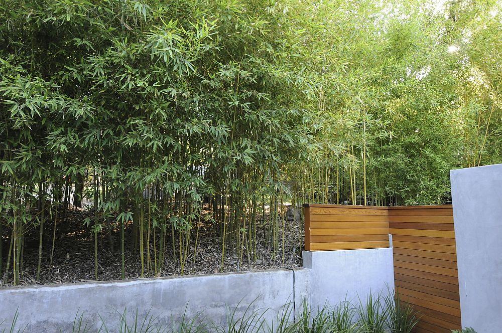 adelaparvu.com despre bambusul in gradina, text Carli Marian, Foto Hamilton Garden