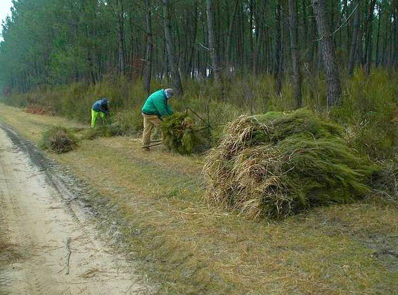 adelaparvu.com despre garduri eco din plante, garduri din Brande, fabricant Franta Aquitaine-Cloture (6)