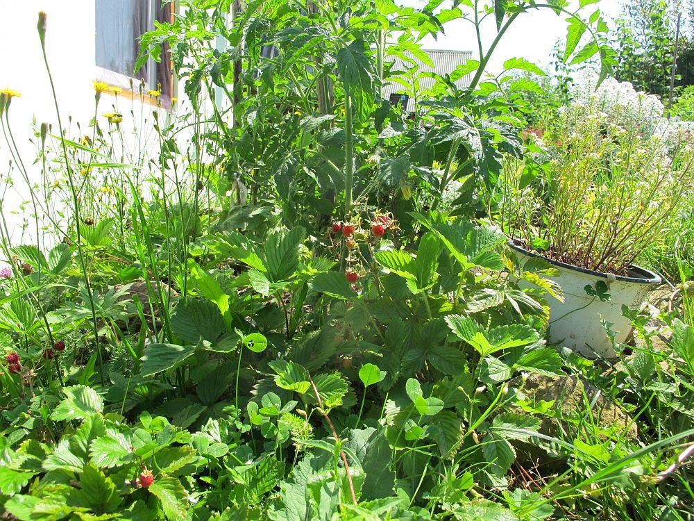 adelaparvu.com despre gradina la munte, gradina cu flori si legume (14)