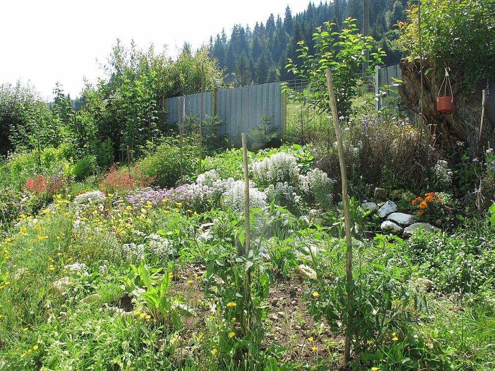 adelaparvu.com despre gradina la munte, gradina cu flori si legume (15)