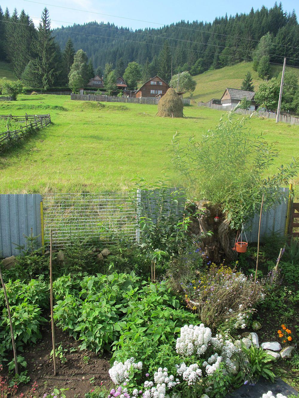 adelaparvu.com despre gradina la munte, gradina cu flori si legume (21)