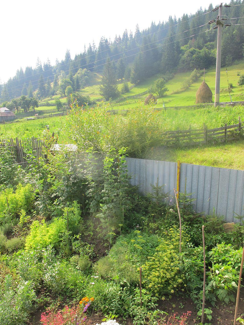 adelaparvu.com despre gradina la munte, gradina cu flori si legume (22)