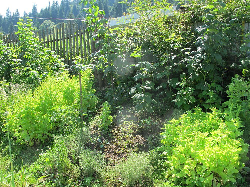 adelaparvu.com despre gradina la munte, gradina cu flori si legume (6)