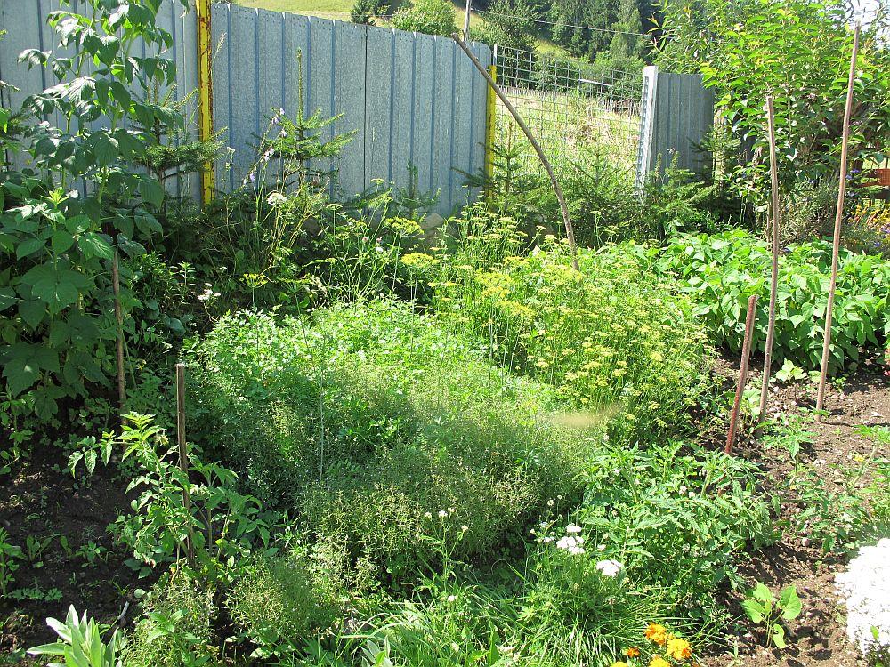 adelaparvu.com despre gradina la munte, gradina cu flori si legume (7)