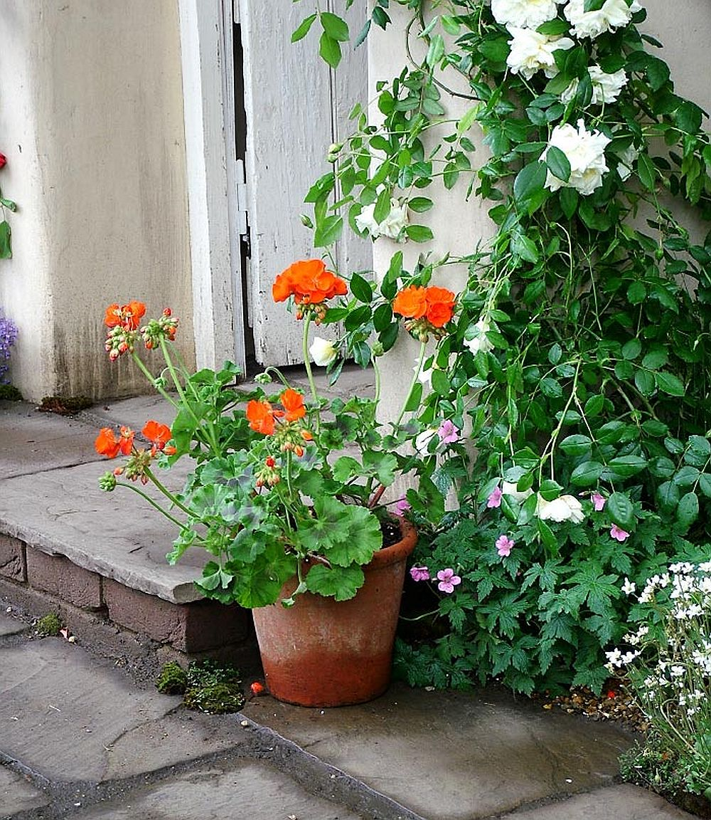 adelaparvu.com despre gradina rustica englezeasca, gradina Anglia, gradina Chelsea Pensioners Garden, designer peisagist Julian Dowle, Foto blog MooseysCountryGarden (17)