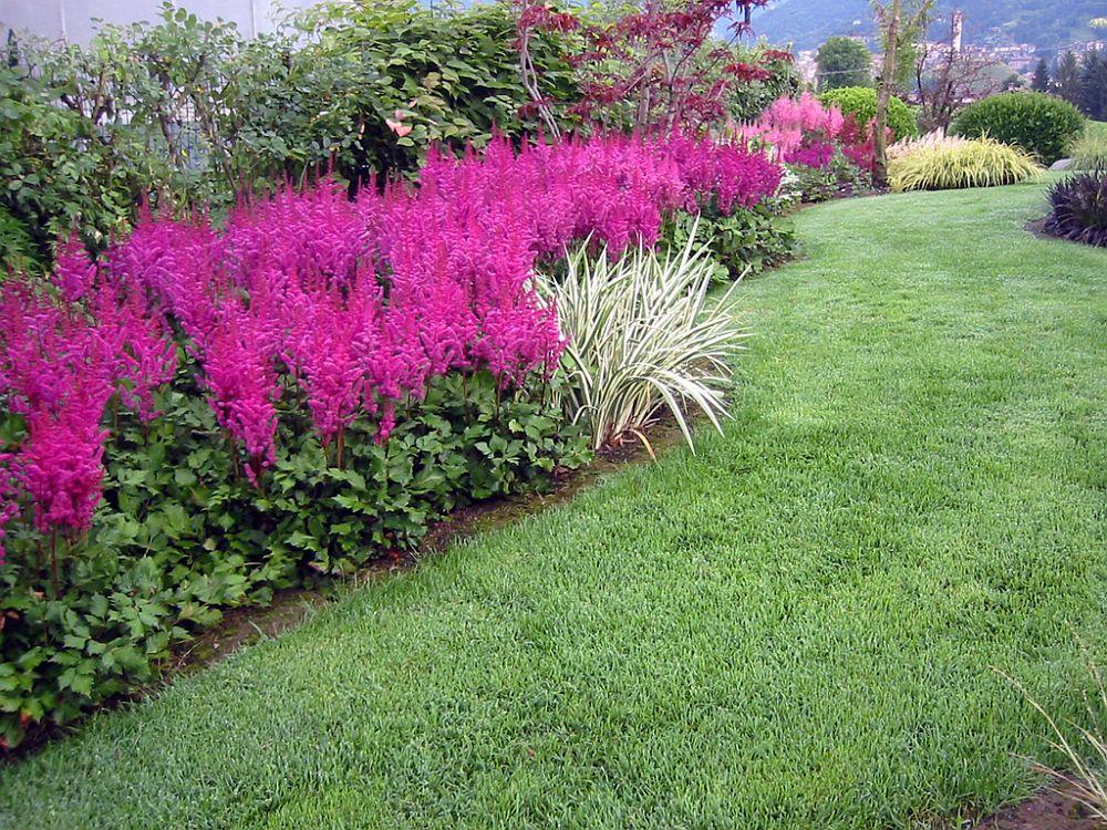 adelaparvu.com despre Astible, plante cu flori pentru gradini semiumbroase, text Carli Marian (1)