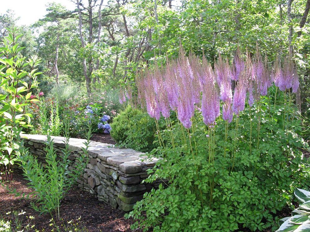 adelaparvu.com despre Astible, plante cu flori pentru gradini semiumbroase, text Carli Marian (5)