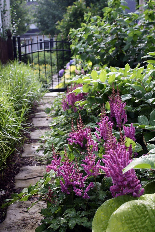 adelaparvu.com despre Astible, plante cu flori pentru gradini semiumbroase, text Carli Marian (6)