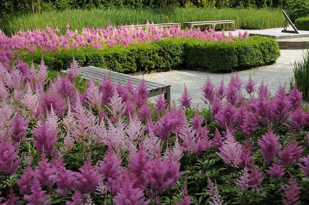 adelaparvu.com despre Astible, plante cu flori pentru gradini semiumbroase, text Carli Marian (7)