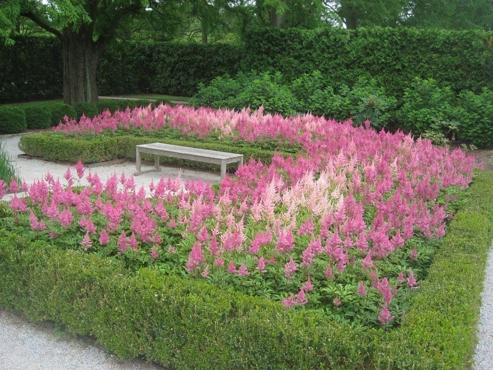 adelaparvu.com despre Astible, plante cu flori pentru gradini semiumbroase, text Carli Marian (8)