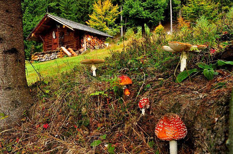 adelaparvu.com despre saune finlandeze sub forma de casute de lemn, design Sruby Pacak, Cehia (3)