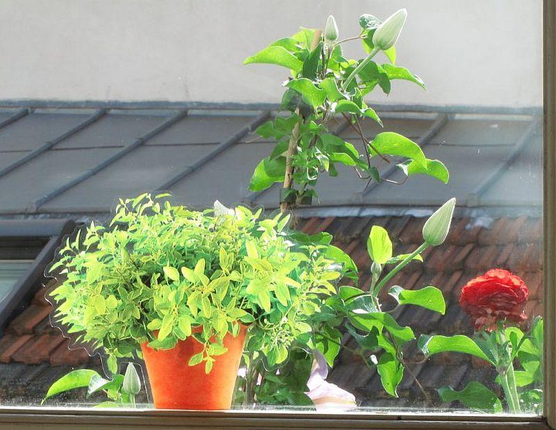 adelaparvu.com despre stickere pentru geam, deco-perete.ro, Foto Arbex Art Decor (3)