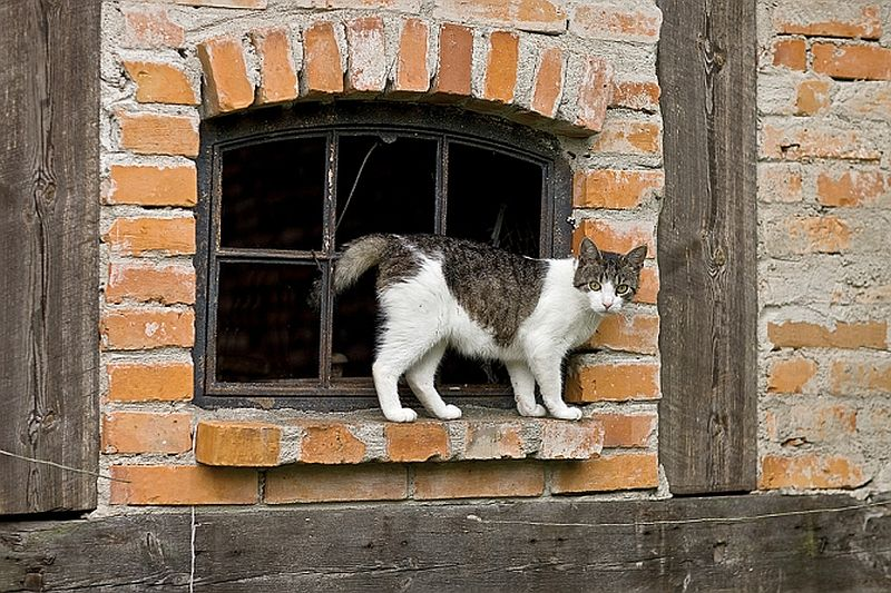 adelaparvu.com despre casa la tara in Polonia, proprietari Marzena si Richard Zwierowiczowie, Foto Weranda Country (9)