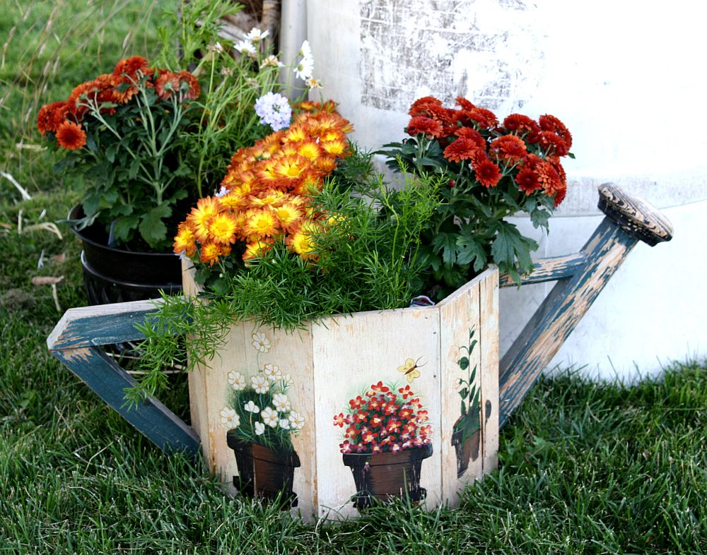 adelaparvu.com despre crinzantema la ghiveci, chrysanthemum, text Carli Marian (1)