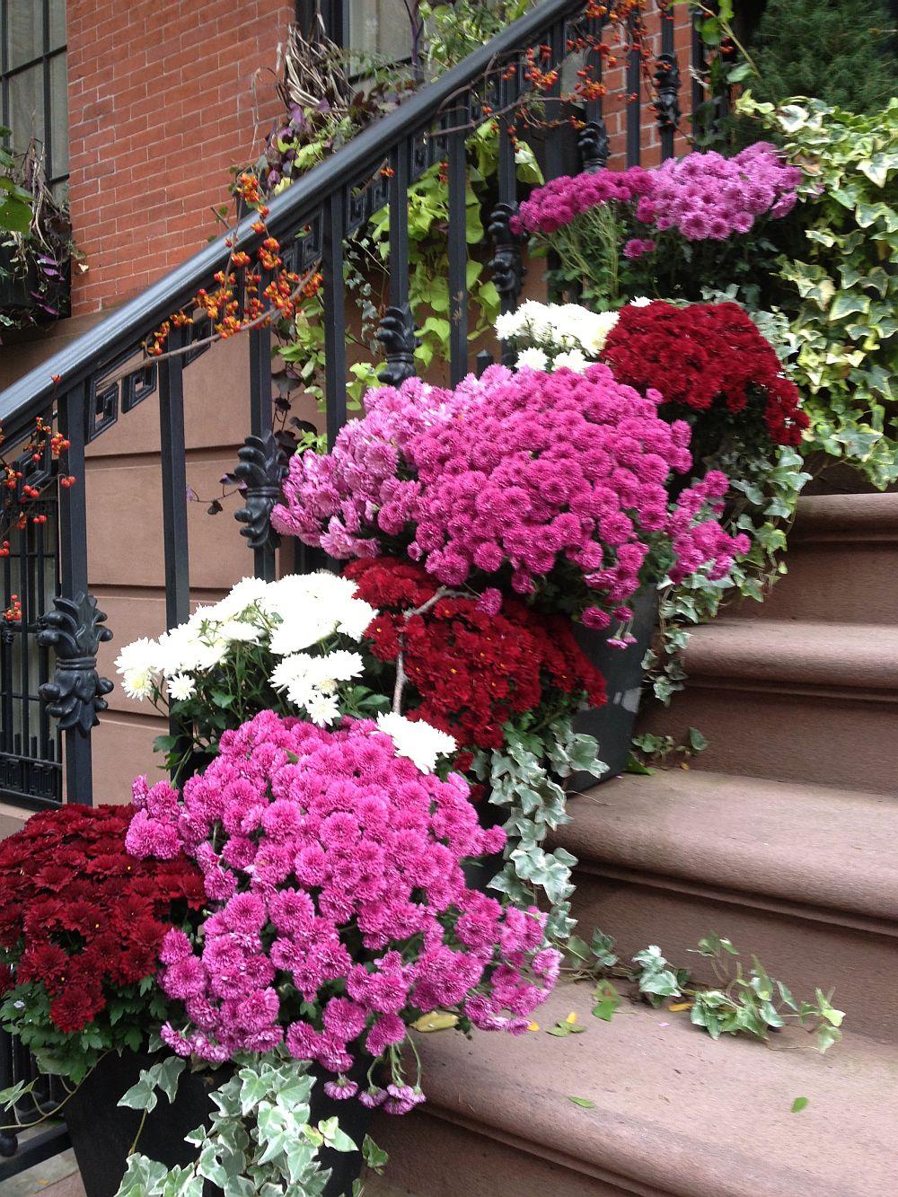 adelaparvu.com despre crinzantema la ghiveci, chrysanthemum, text Carli Marian (2)
