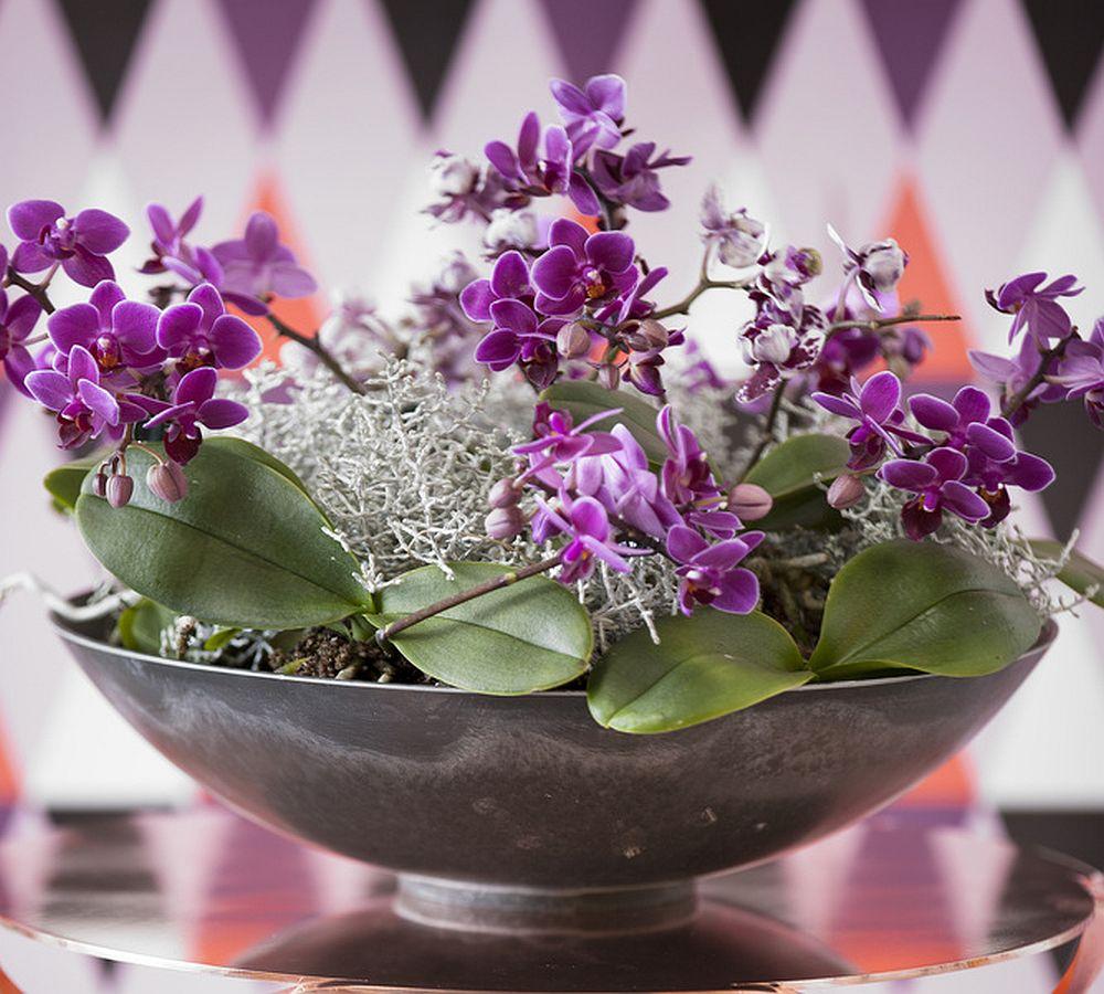adelaparvu.com despre orhidee, Text Carli Marian, Foto Floradania (2)