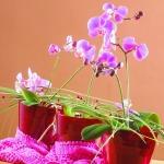 adelaparvu.com despre orhidee, Text Carli Marian, Foto Floradania (3)