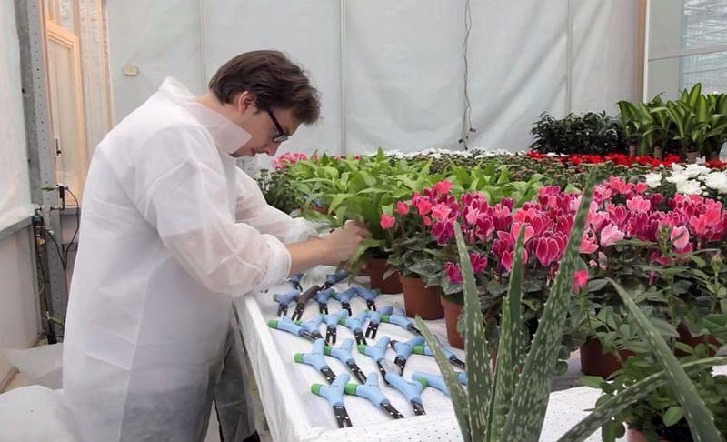 adelaparvu.com despre Parrot Flower Power, text Carli Marian (11)