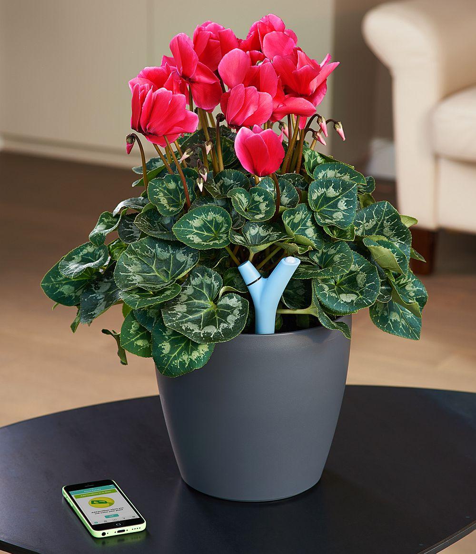 adelaparvu.com despre Parrot Flower Power, text Carli Marian (12)