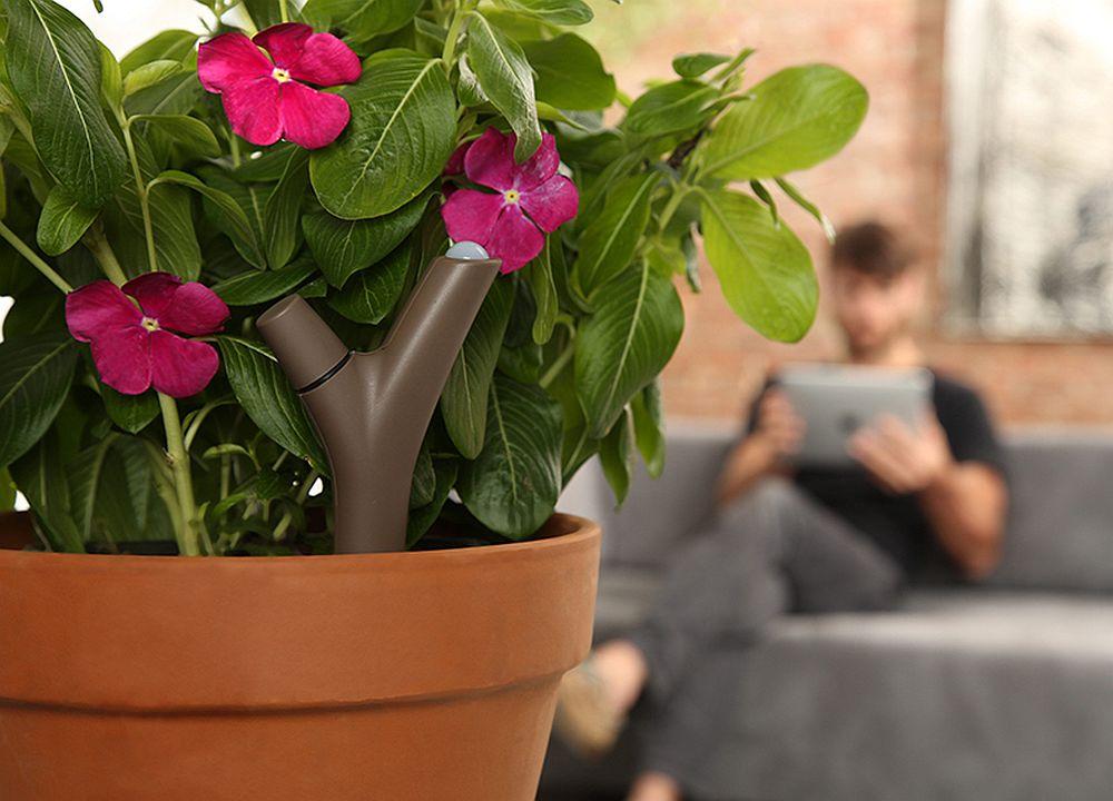 adelaparvu.com despre Parrot Flower Power, text Carli Marian (5)
