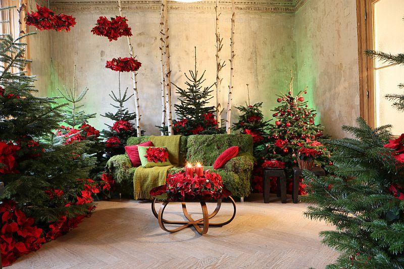 adelaparvu.com despre sfaturi pentru Steaua Crăciunului, Euphorbia pulcherrima, Foto Floradania, Text Carli Marian (3)