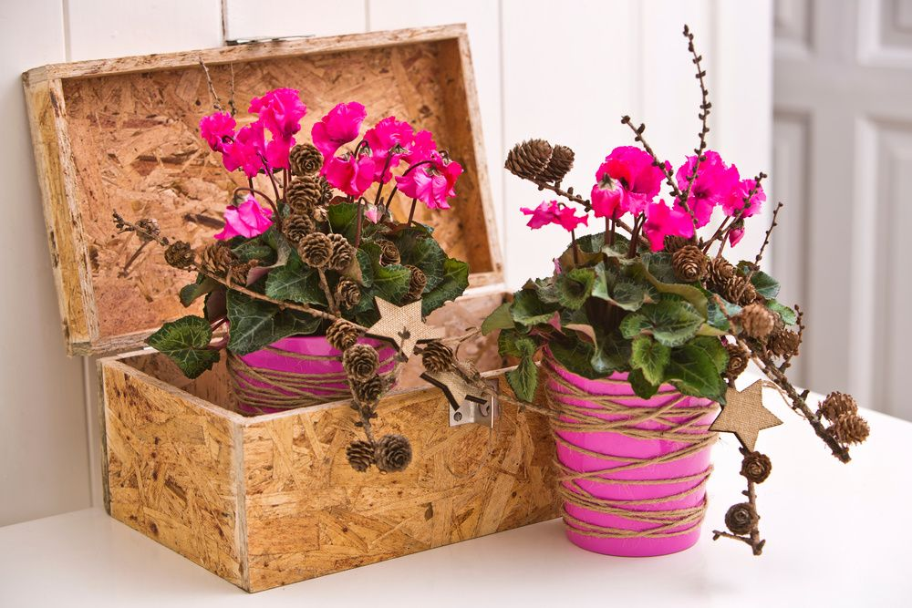adelaparvu.com despre Cyclamen sau violeta de Alpi, Text Carli Marian, Foto Floradania (1)