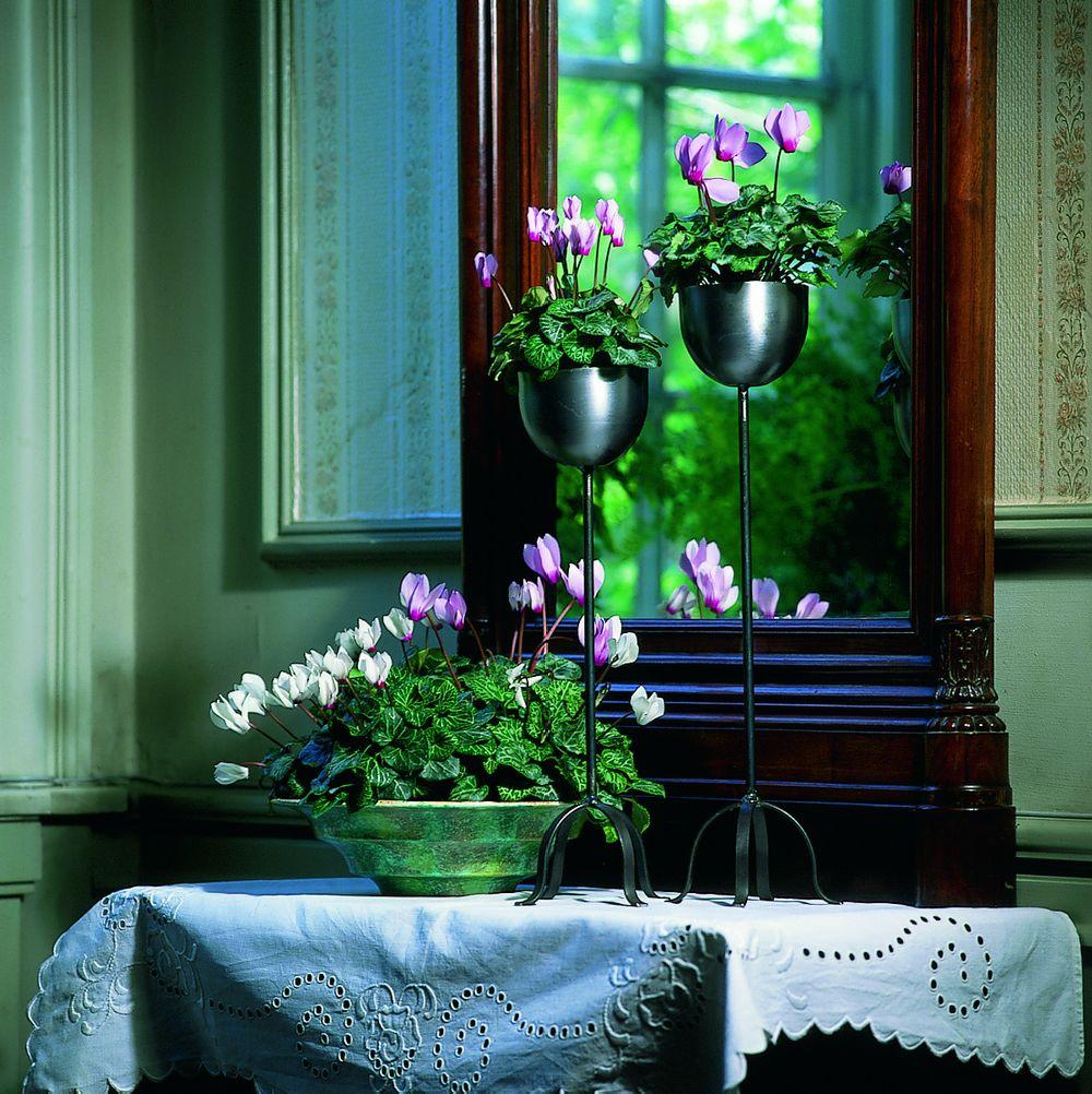 adelaparvu.com despre Cyclamen sau violeta de Alpi, Text Carli Marian, Foto Floradania (13)