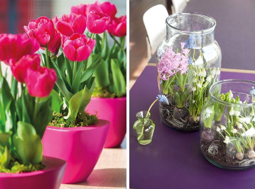 adelaparvu.com despre flori de primavara, cum se ingrijesc florile bulboase, text Carli Marian, Foto Floradania (10)