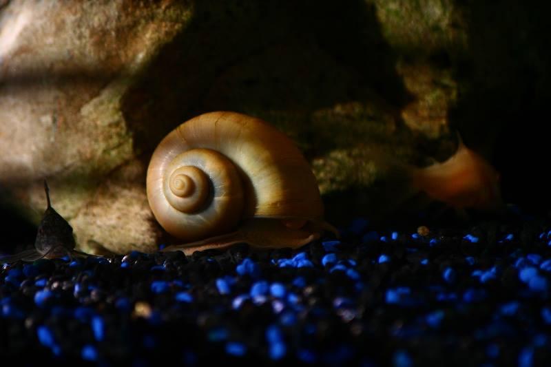 adelaparvu.com despre Evidecor, Tmisoara, fabrica de nisip si pietre decorative (4)