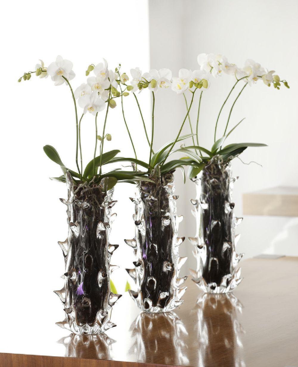 adelaparvu.com despre ingrijirea orhideei dupa ce se ofilesc florile, text Carli Marian, Foto Floradania (1)