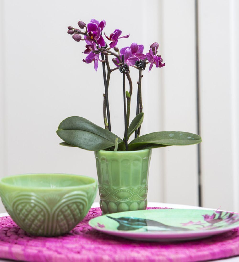 adelaparvu.com despre ingrijirea orhideei dupa ce se ofilesc florile, text Carli Marian, Foto Floradania (10)