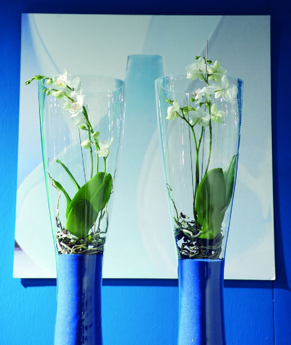 adelaparvu.com despre ingrijirea orhideei dupa ce se ofilesc florile, text Carli Marian, Foto Floradania (11)