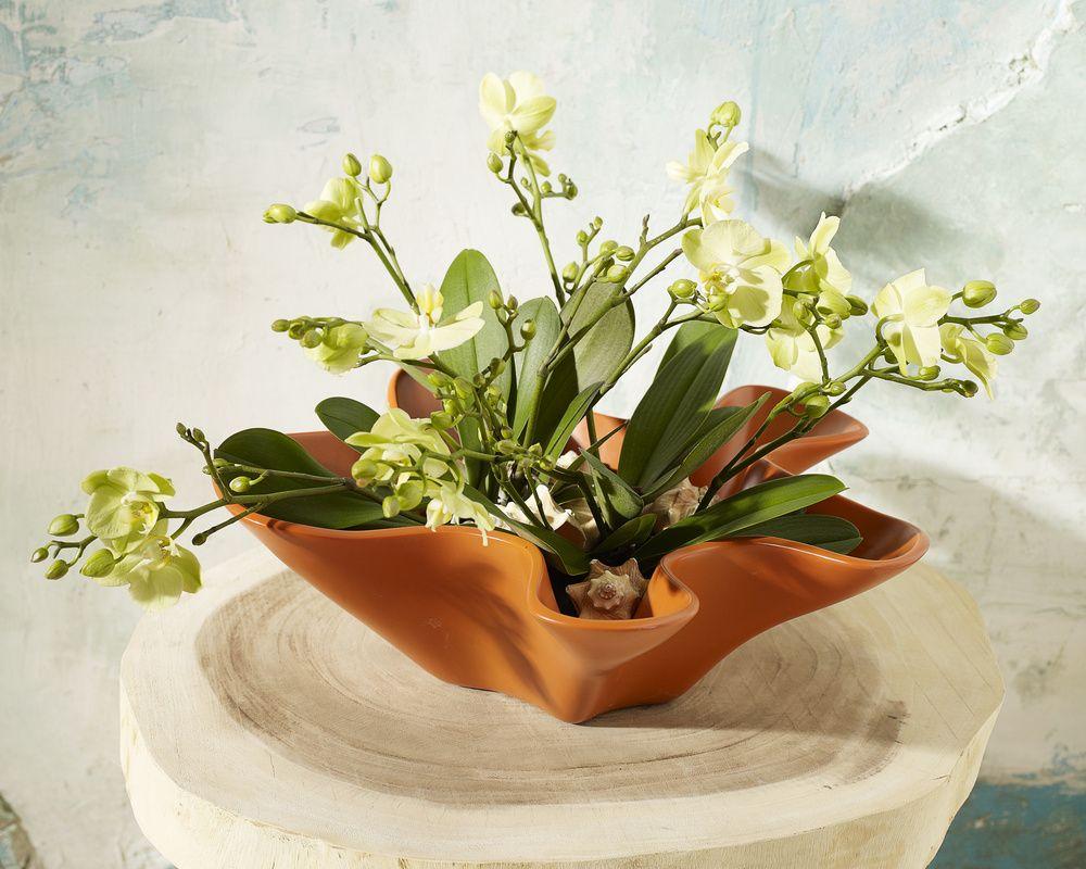 adelaparvu.com despre ingrijirea orhideei dupa ce se ofilesc florile, text Carli Marian, Foto Floradania (3)