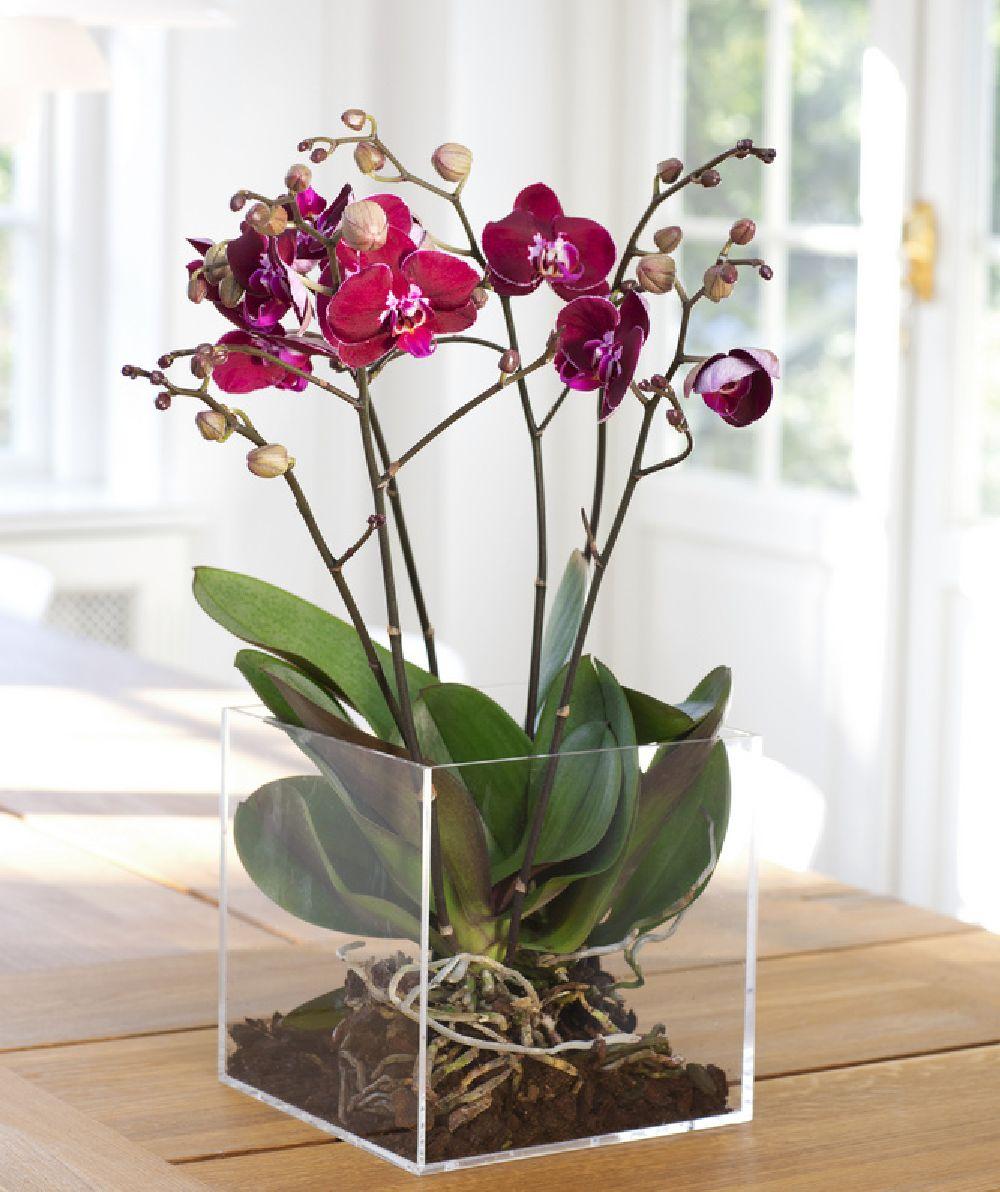 adelaparvu.com despre ingrijirea orhideei dupa ce se ofilesc florile, text Carli Marian, Foto Floradania (5)
