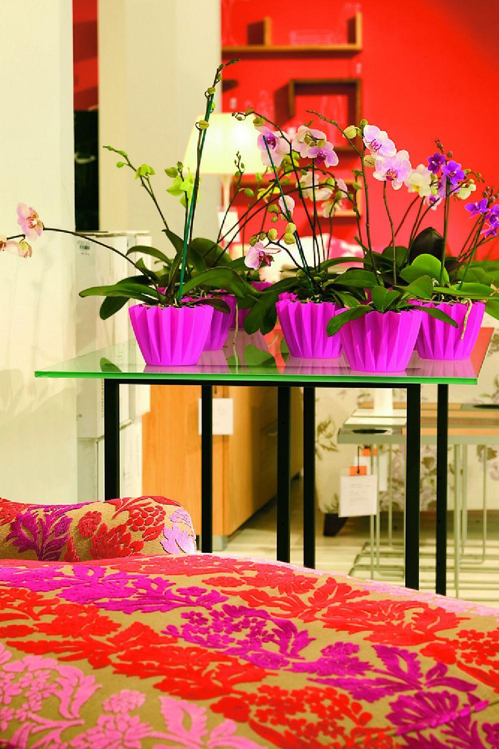 adelaparvu.com despre ingrijirea orhideei dupa ce se ofilesc florile, text Carli Marian, Foto Floradania (7)