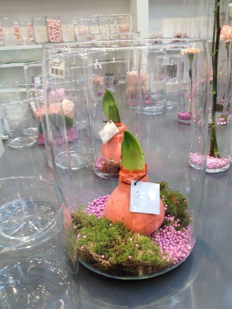 adelaparvu.com despre plantele care infloresc fara apa, tText Carli Marian, Foto Greencre8 (1)