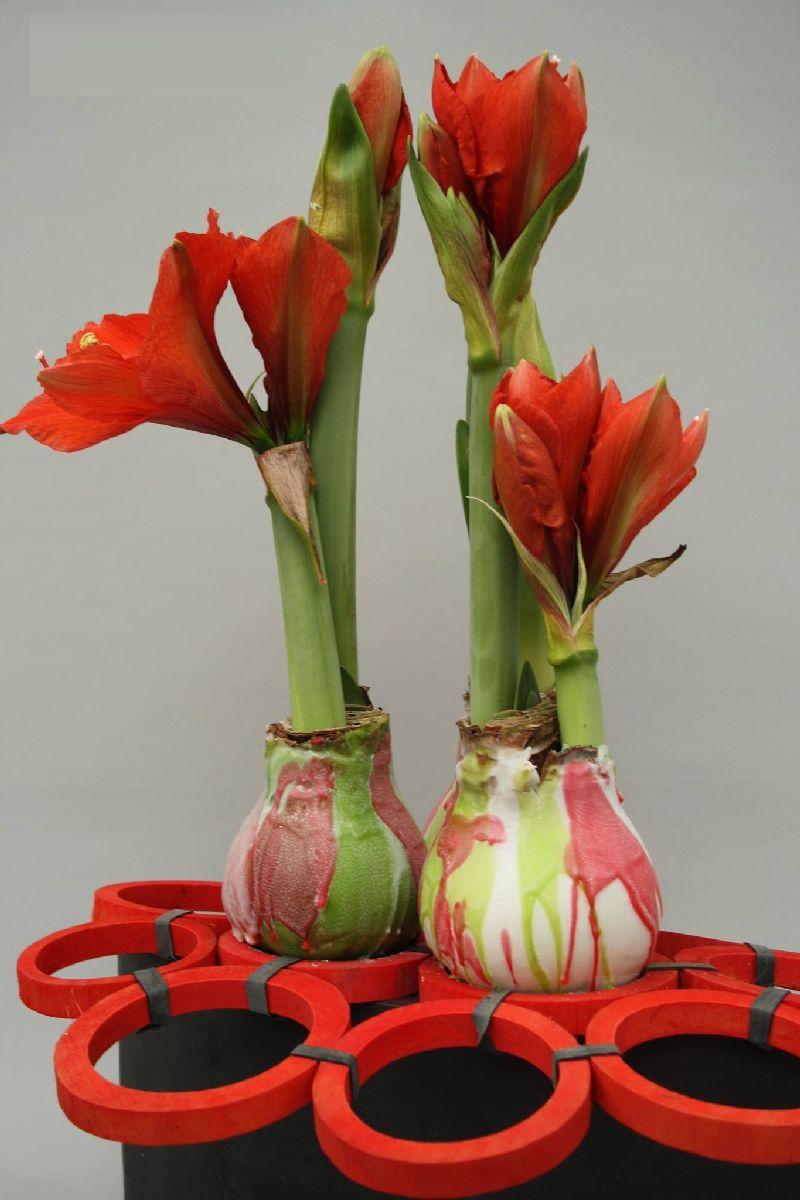 adelaparvu.com despre plantele care infloresc fara apa, tText Carli Marian, Foto Greencre8 (11)