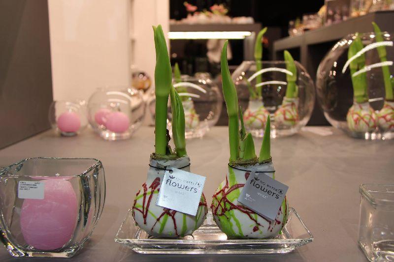 adelaparvu.com despre plantele care infloresc fara apa, tText Carli Marian, Foto Greencre8 (13)