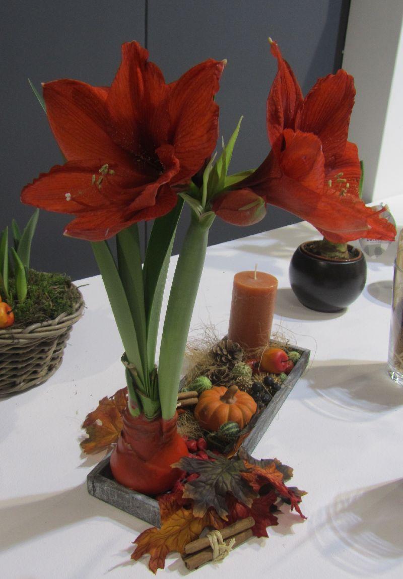 adelaparvu.com despre plantele care infloresc fara apa, tText Carli Marian, Foto Greencre8 (14)