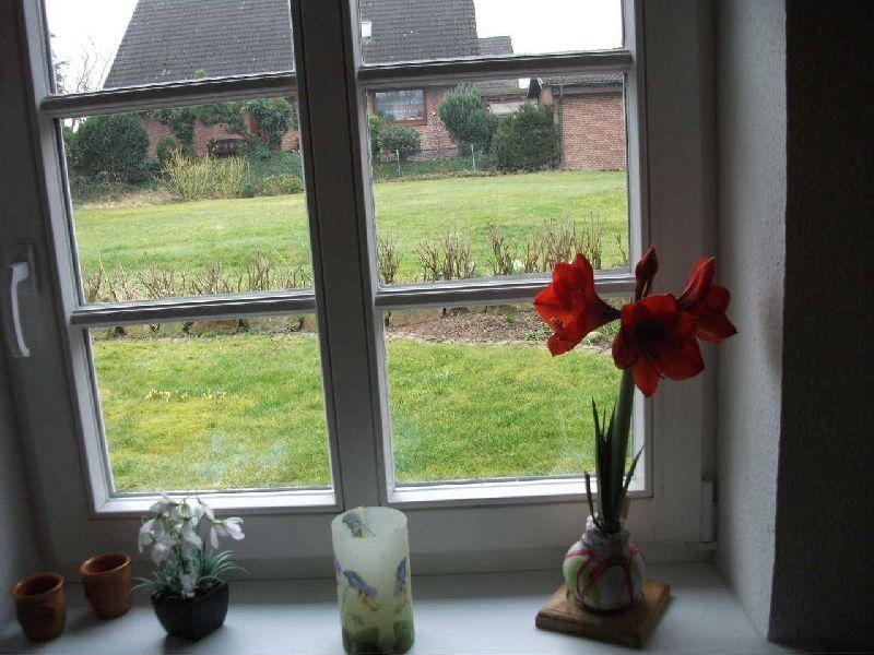 adelaparvu.com despre plantele care infloresc fara apa, tText Carli Marian, Foto Greencre8 (7)