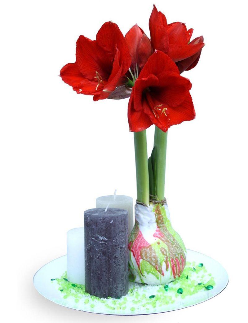 adelaparvu.com despre plantele care infloresc fara apa, tText Carli Marian, Foto Greencre8 (9)