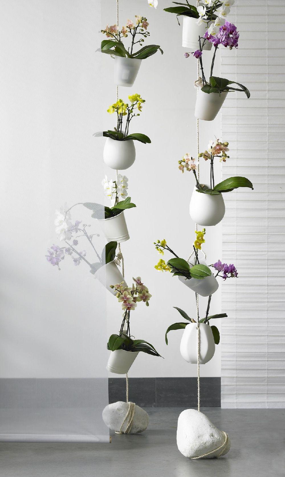 adelaparvu.com despre tratamentul pentru orhideea cu radacini putrezite si frunze ingalbenite, Text Carli Marian (1)
