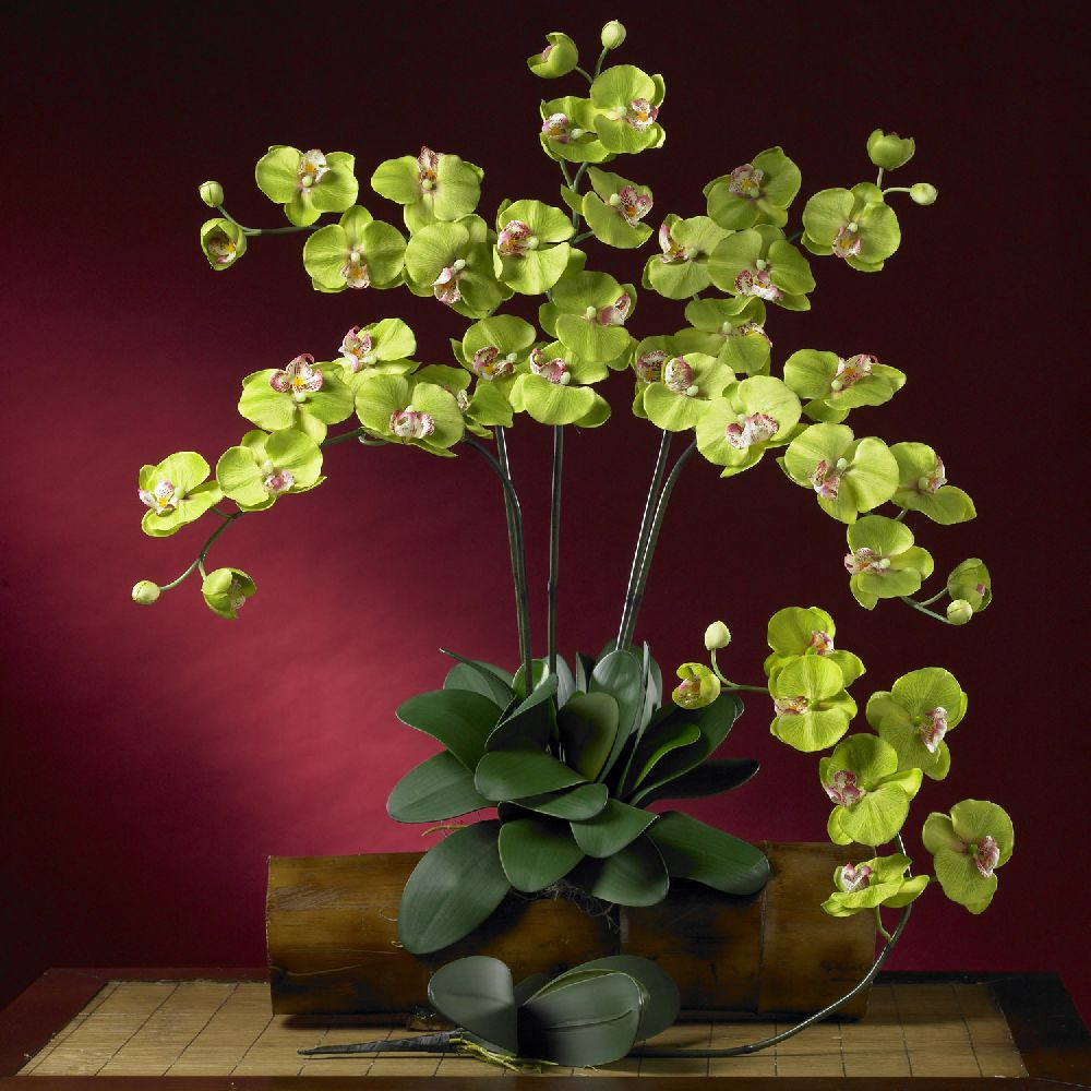 adelaparvu.com despre tratamentul pentru orhideea cu radacini putrezite si frunze ingalbenite, Text Carli Marian (11)