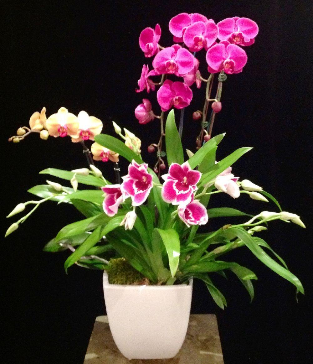 adelaparvu.com despre tratamentul pentru orhideea cu radacini putrezite si frunze ingalbenite, Text Carli Marian (3)