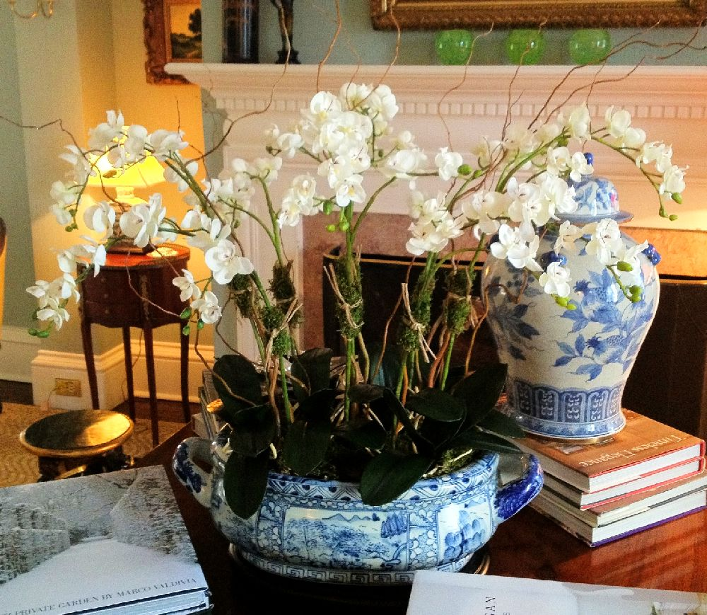 adelaparvu.com despre tratamentul pentru orhideea cu radacini putrezite si frunze ingalbenite, Text Carli Marian (6)